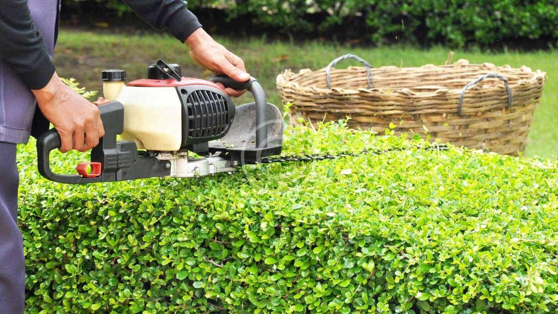 Przygotowanie ogrodu na zimę