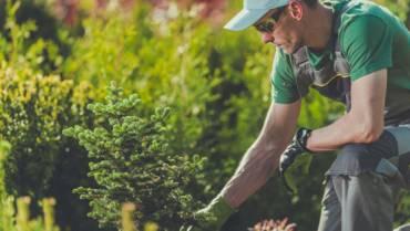 Nasadzanie roślinności