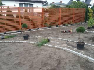 trawniki-nasadzenia-11